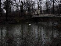 Carolasee Großer Garten in Dresden im Winter