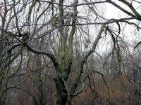 Baum im großen Garten in Dresden im Winter
