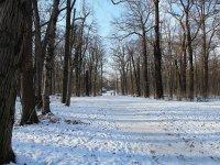Allee im großen Garten in Dresden im Winter