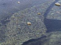 Neuer Teich Algen im Eis. Großer Garten in Dresden im Winter