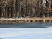 Neuer Teich im großen Garten in Dresden im Winter