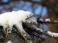 winterlicher Ast mit Schnee im großen Garten Dresden im Januar 2013