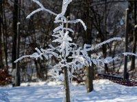 winterlicher kleiner Baum im Wildpark Osterzgebirge im Januar 2013
