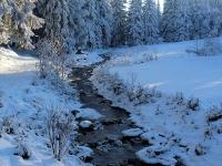 Winterwald in Schellerhau Januar 2013