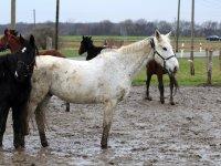 Gruppe Pferde im Reiterhof und Pension Kunze in Wurzen