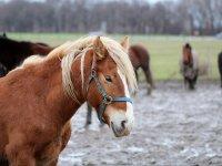 Pferd im Reiterhof und Pension Kunze in Wurzen